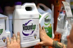 Bồi thẩm đoàn Mỹ kết luận thuốc diệt cỏ Monsanto gây ung thư