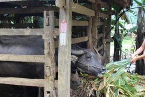 Gần 3.000 hộ nông dân Cao Bằng được tiếp vốn của Hội