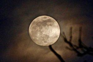 Siêu trăng giun là gì, xuất hiện khi nào?