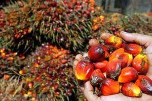 Chính phủ Indonesia đe dọa tẩy chay một số hàng hóa của EU