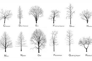 Viết mật ngữ của 26 chữ cái Latinh bằng tiếng… 'cây', bạn có muốn thử?