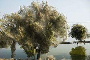 Những khoảnh khắc thế giới tự nhiên khiến con người phải 'dựng tóc gáy'
