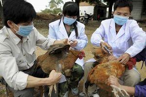 Xuất hiện nhiều chủng cúm gia cầm nguy hiểm mới