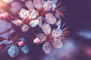 Lạc lối ở xứ sở kim chi: Mỗi tháng một loài hoa nở rộ