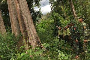 3 năm triển khai đóng cửa rừng tự nhiên: Vẫn hơn 2.300ha rừng bị chặt phá trái phép mỗi năm