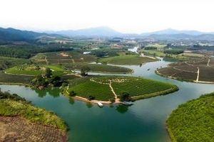 Cienco 4 thâu tóm đảo chè đẹp nhất Nghệ An: Sau 2 năm dự án 1.500 tỷ vẫn 'án binh bất động'?