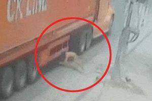 CLIP SỐC: Người đàn ông cố tình lao đầu vào bánh xe tải và cái kết không tưởng