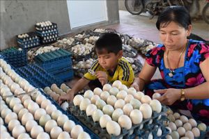 Trứng vịt xuống giá, người nuôi lỗ nặng