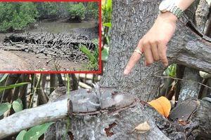 Đồng Nai: Rừng phòng hộ Long Thành bị 'băm nát'