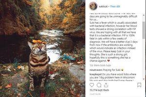 Bộ ảnh chú mèo 'sang chảnh' du lịch cùng chủ khắp thế gian