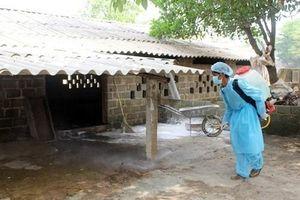 Chương Mỹ: Khử trùng môi trường phòng chống bệnh dịch tả lợn Châu Phi