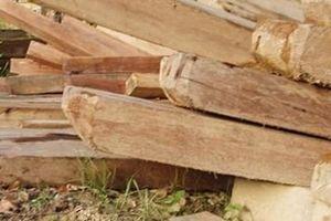 Hơn 100m³ gỗ đã bị lâm tặc tẩu tán khỏi rừng Phong Nha - Kẻ Bàng