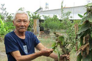 Chuyện tử tế: Lão nông 60 năm tìm thuốc cứu người