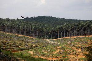 Malaysia dọa mua chiến đấu cơ Trung Quốc nếu châu Âu giảm mua dầu cọ