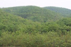 Chuyện dưới tán rừng cao su ở vùng đất mới