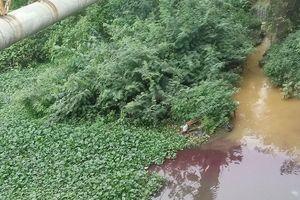Ám ảnh dòng nước đổi màu như 'tắc kè hoa' ở Dương Nội - Hà Đông