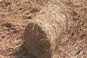 Nông dân tại ĐBSCL 'hốt bạc' nhờ bán rơm cuộn