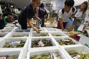 Kế hoạch tăng thuế tiêu dùng của Nhật Bản vẫn sẽ đúng lịch trình