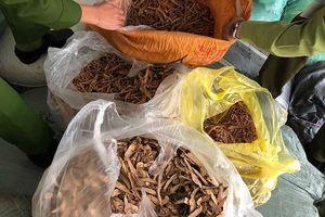 Hà Nội: Thu giữ hơn 7 tấn thuốc bắc không rõ nguồn gốc
