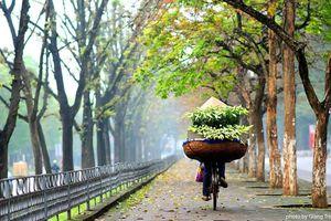 Xao xuyến mùa hoa loa kèn nở gọi tháng tư về trên từng góc phố Hà Nội