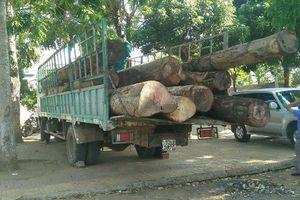 Kon Tum: Xe chở gỗ lậu 'tung tăng' trên bến du lịch