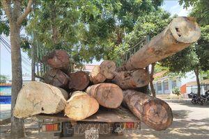 Bắt giữ vụ vận chuyển hơn 11m3 gỗ không rõ nguồn gốc