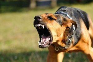Cà Mau: Chó dại cắn người rồi lăn ra chết