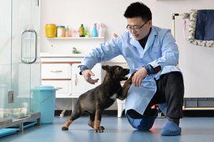 Trung Quốc nhân bản chó nghiệp vụ để rút ngắn thời gian huấn luyện