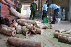 Phát hiện hơn 9 tấn ngà voi châu Phi nhập về Đà Nẵng