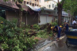 Hà Nội lên kế hoạch giải tỏa cây đổ sau bão