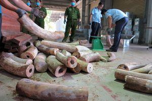 Đà Nẵng bắt 9,1 tấn nghi ngà voi cất giấu tinh vi