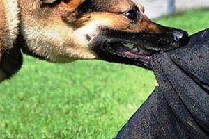 Từ những vụ chó tấn công, cắn chết người: Có thể xem xét trách nhiệm hình sự
