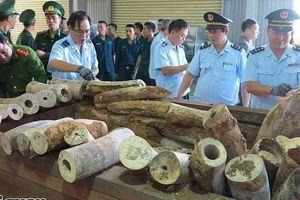 Hải quan Đà Nẵng phối hợp bắt giữ lô hàng khủng hơn 9,1 tấn nghi ngà voi
