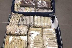 Thu giữ hàng nghìn điếu xì gà không nhãn mác trong vali nữ hành khách