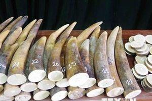 Hải quan Đà Nẵng phát hiện hơn 9 tấn hàng hóa nghi là ngà voi