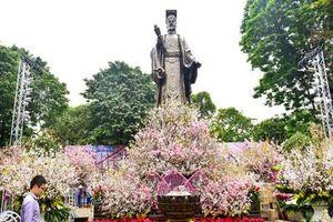 Ngắm Hoa anh đào Nhật Bản khoe sắc giữa lòng Hà Nội