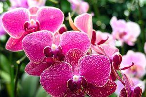 8 loại cây nên trồng trong nhà để mang lợi ích tốt cho gia chủ