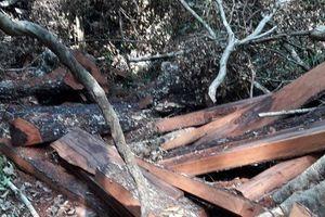 Vụ phá rừng ở Phong Nha - Kẻ Bàng: Đã tìm ra nơi giấu gỗ mun