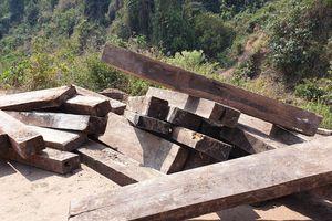Phát hiện 3 hầm gỗ mun 'khủng' ở biên giới Thượng Trạch