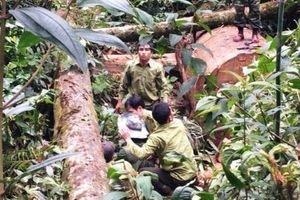 Nghệ An: Bắt quả tang 2 đối tượng Lào khai thác gỗ rừng trái phép
