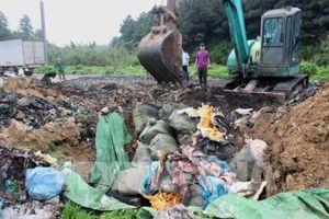 Tiêu hủy hơn 1,6 tấn nầm lợn có mùi hôi thối, đang phân hủy