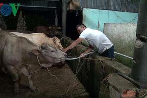 Bắt quả tang 2 đối tượng bơm nước vào bụng bò trước khi xẻ thịt