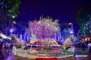 Người dân Hà Nội ngắm hoa anh đào khoe sắc giữa đêm