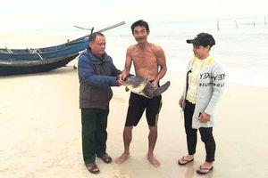 Ngư dân hai lần thả cá thể rùa quý hiếm về tự nhiên