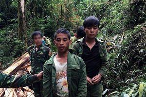 Bắt giữ 2 đối tượng người Lào đốn hạ sa mu cổ thụ đường kính 1,7m