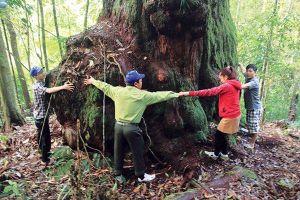 Kỳ diệu 'vương quốc' của những gốc cây lớn chưa từng thấy ở Quảng Nam