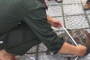 Cá thể rùa biển mắc lưới ngư dân được thả về biển
