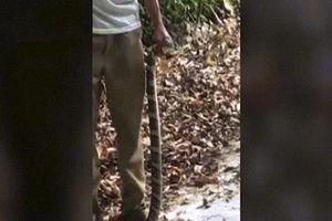 TQ: Nắm đầu rắn hổ mang cực độc chụp ảnh, lãnh hậu quả thảm khốc