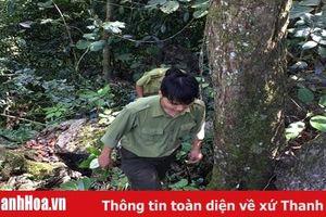 Phối hợp bảo vệ rừng, ngăn chặn buôn lậu lâm sản trên địa bàn các huyện miền núi