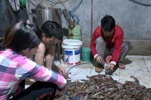 Hà Nội: Bắt quả tang cơ sở kinh doanh thủy sản bơm tạp chất vào tôm